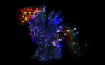 Neonflame Rainbow Dash Background