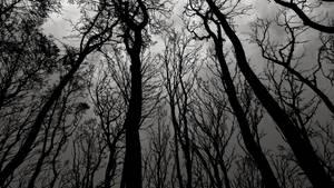 black forest wallpaper by LazurURH