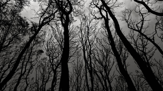 black forest wallpaper