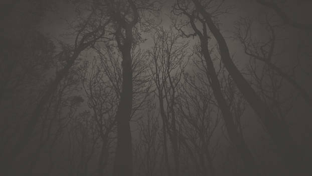 forest wallpaper 02