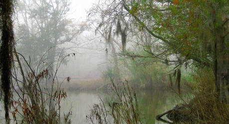 My Swampy Back Yard