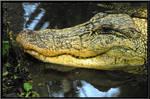 Wildlife Garden White Gator