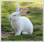 Lafreinier Park Bunny 2 by SalemCat