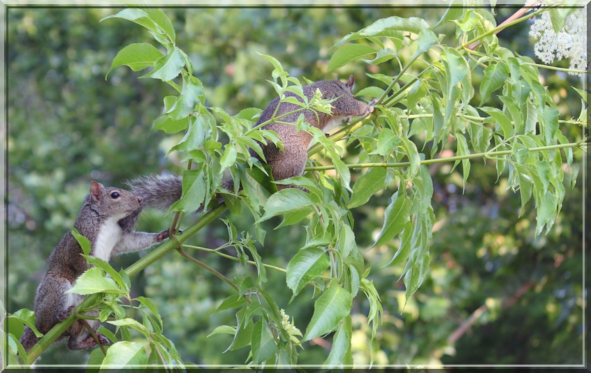 Lafrienier Park Squirrels by SalemCat