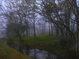 My Foggy Back Yard by SalemCat