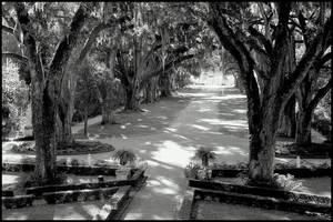 Rosedown Plantation Entrance by SalemCat