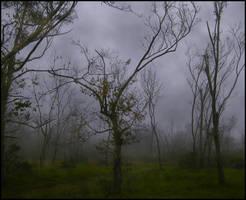 A Walk Through the Fog by SalemCat