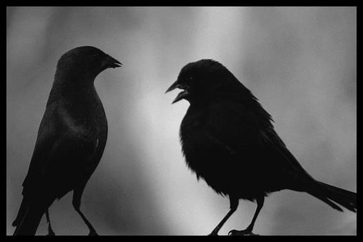 A Conversation Among Birds