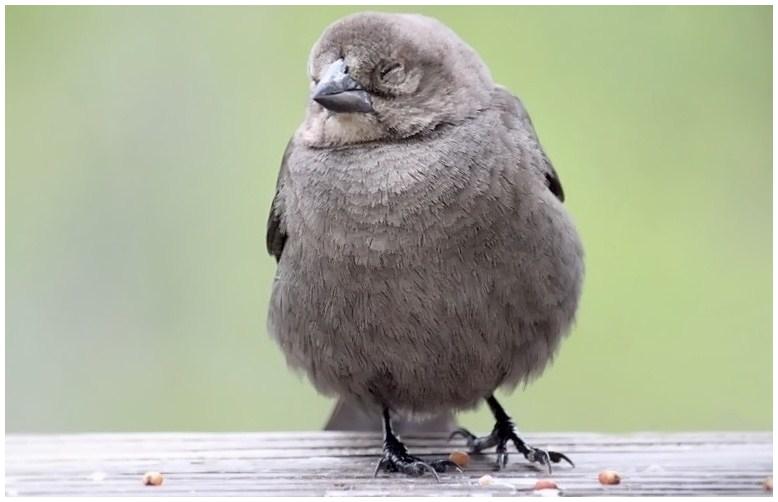 Sleepy Birdie by SalemCat