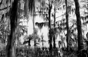 Louisiana Swamp by SalemCat