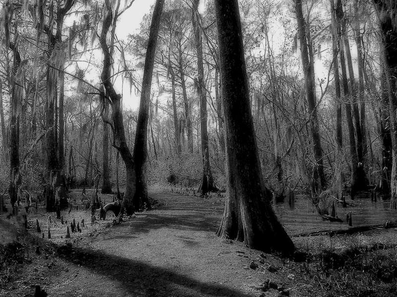 Swamp Path by SalemCat