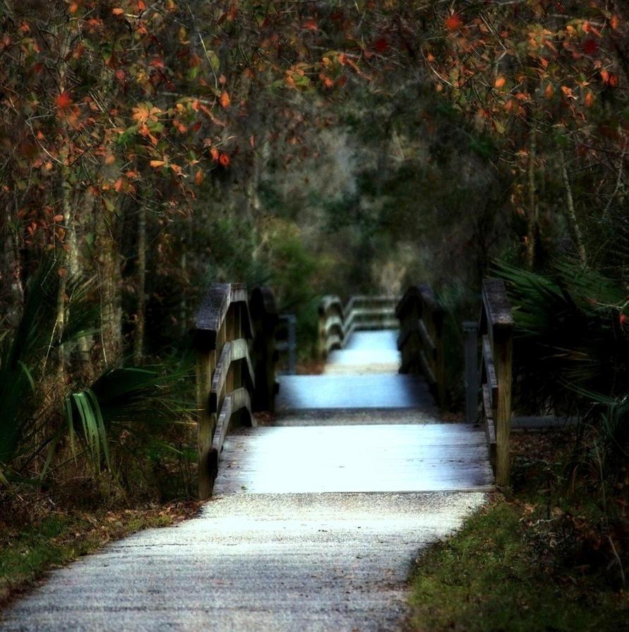 Path of Shadows by SalemCat