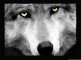 Wolf Wallpaper by Underoathboy777