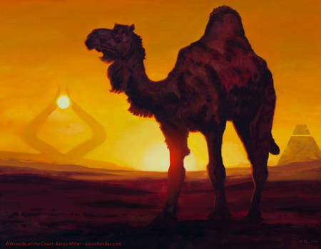 Solitary Camel