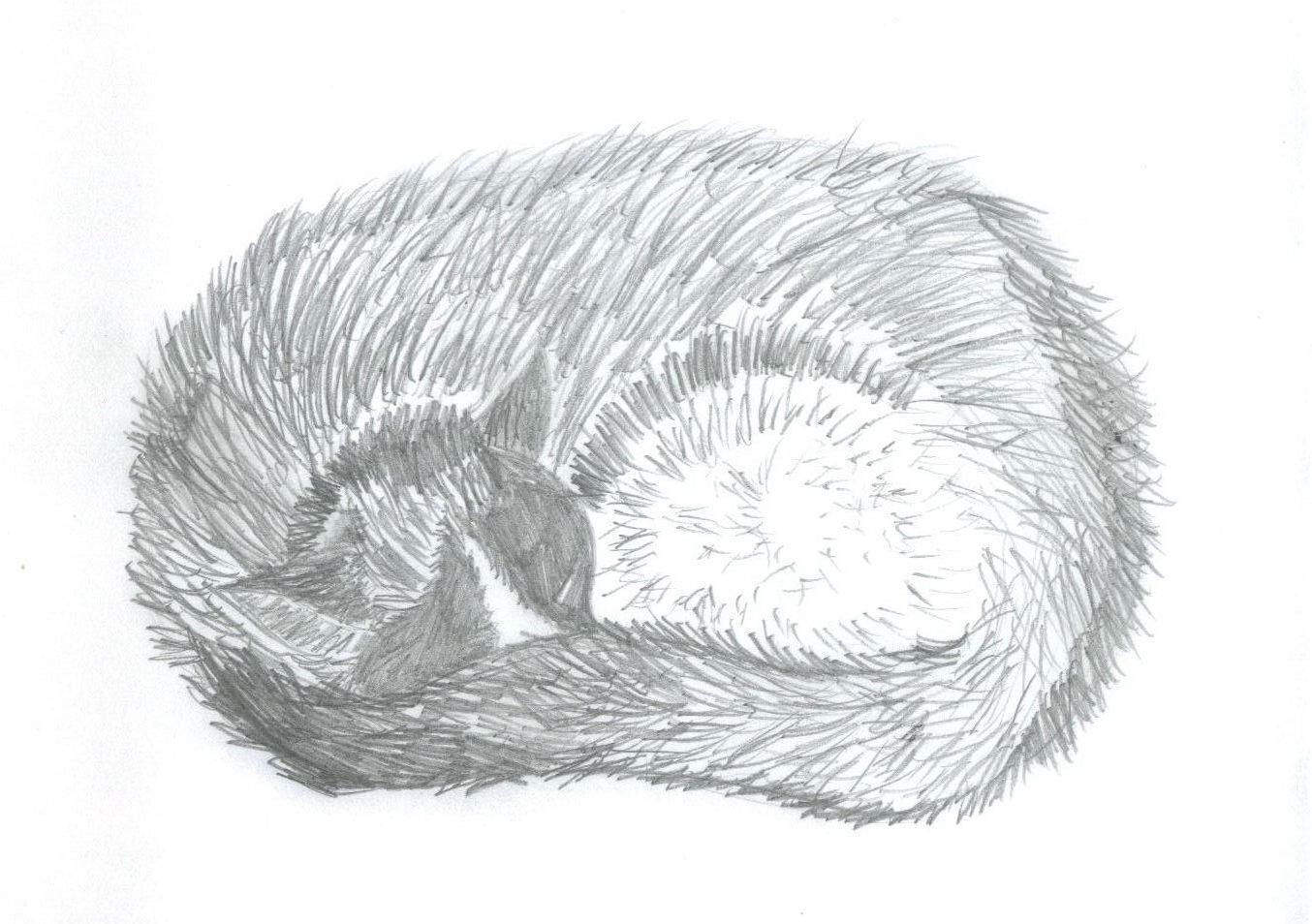 Cat:p by ArienGothica