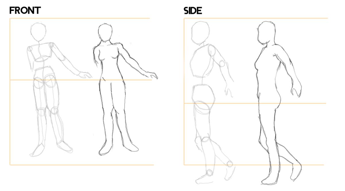 how to draw female anime anatomy