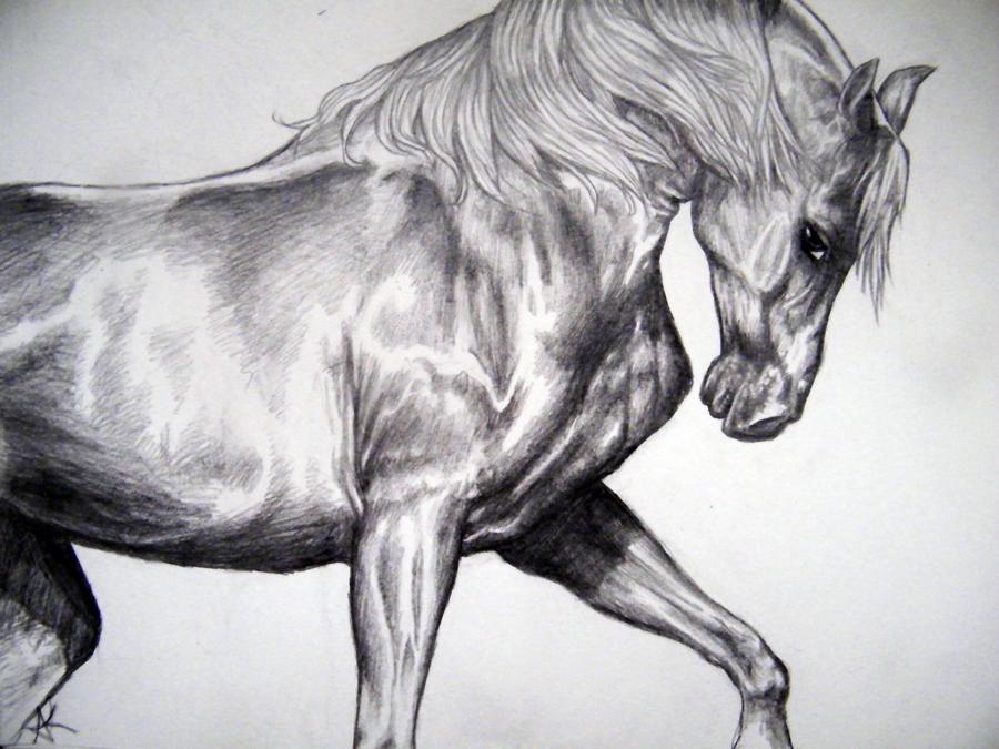 Stallion by Thunderflight