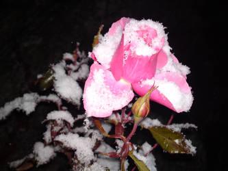 Snowy rose by KoseMoseGlitterKua
