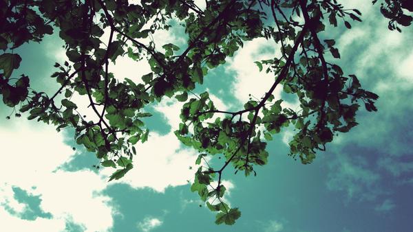 Leaf me alone... by cookiemonstah