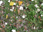 Autumn Leaves Stock by Sasa-Stock