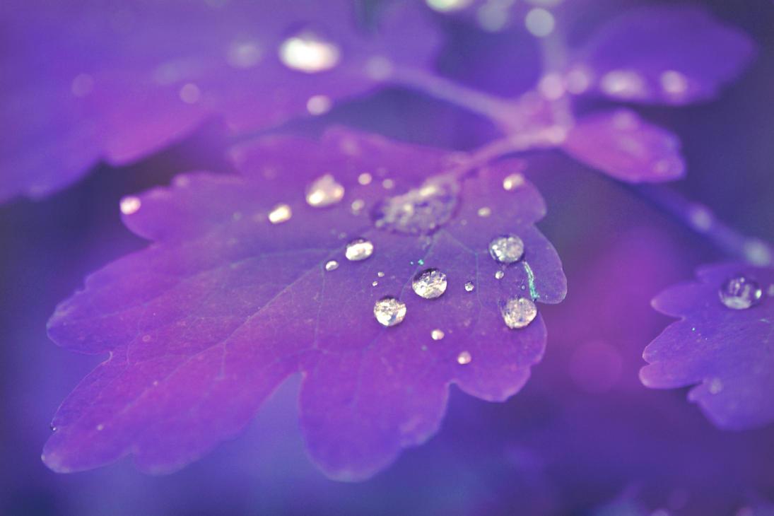 purple drop by vekoridia