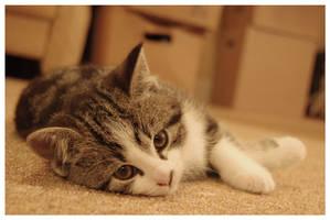 kitten by coffeespice