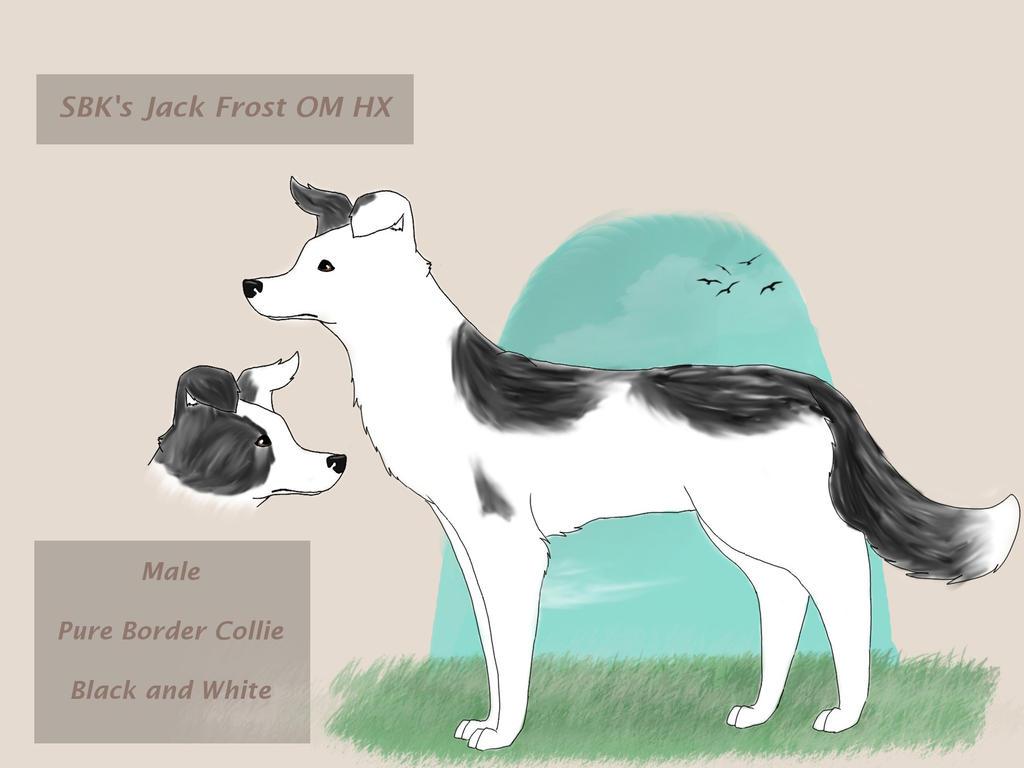 SBK's Jack Frost by SpringBlossomKennels