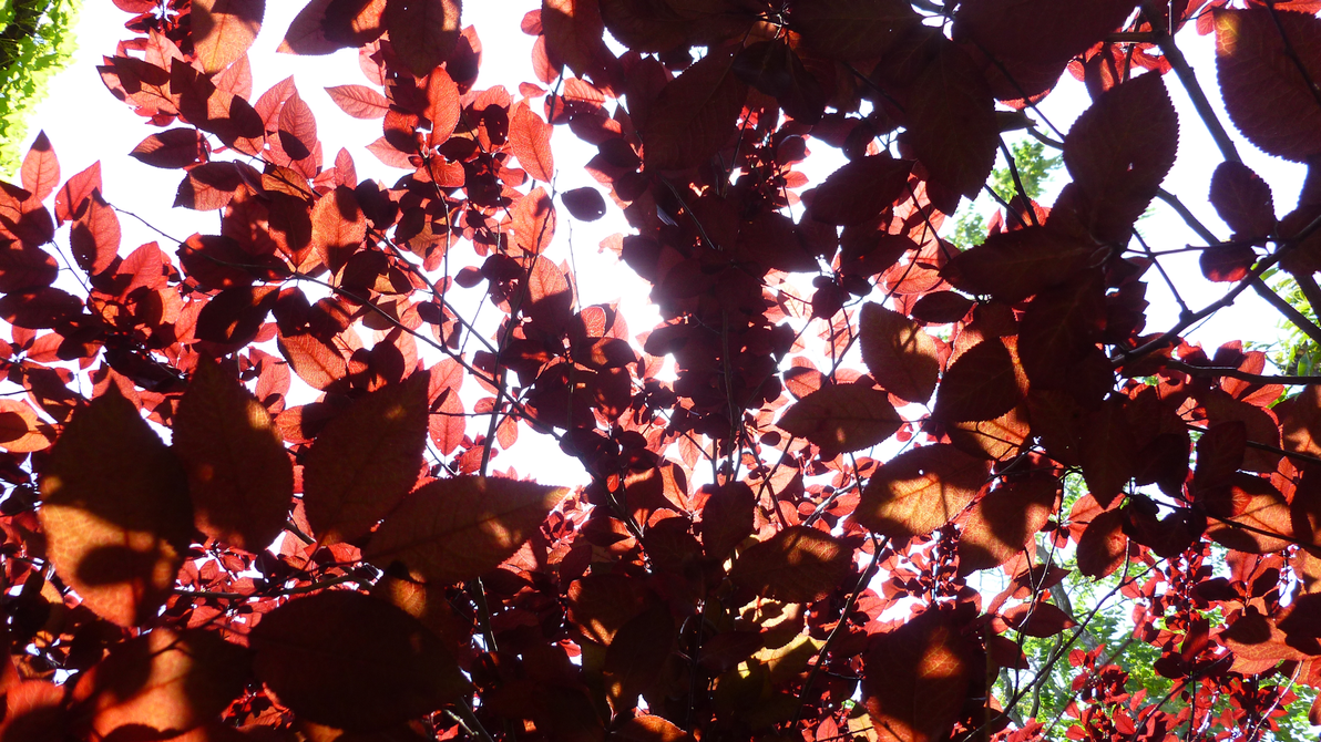Wall Art Red Leaves : Wallpaper wall of red leaves by lordnobleheart on deviantart