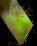 Hanging by the web