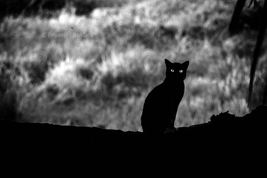 Black Cat of the East
