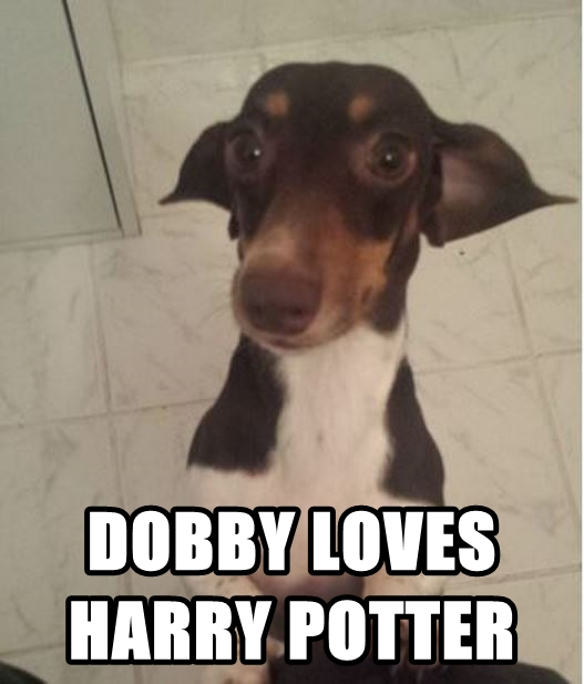 Dobby Is Free Dog