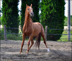 River - Stock 3 by Horses--Stock