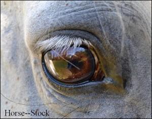 Horses--Stock's Profile Picture