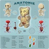 Anatomie Gummi Bar by freeny