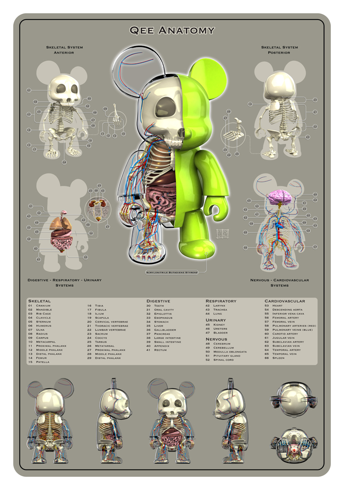 Qee Anatomy By Freeny On Deviantart