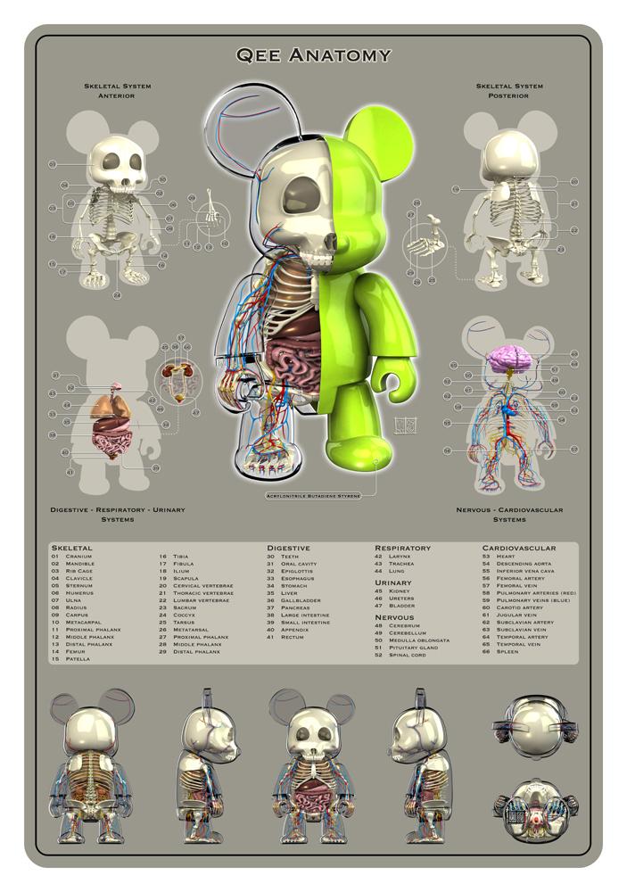 Qee Anatomy by freeny