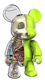 Qee Anatomy 360 by freeny
