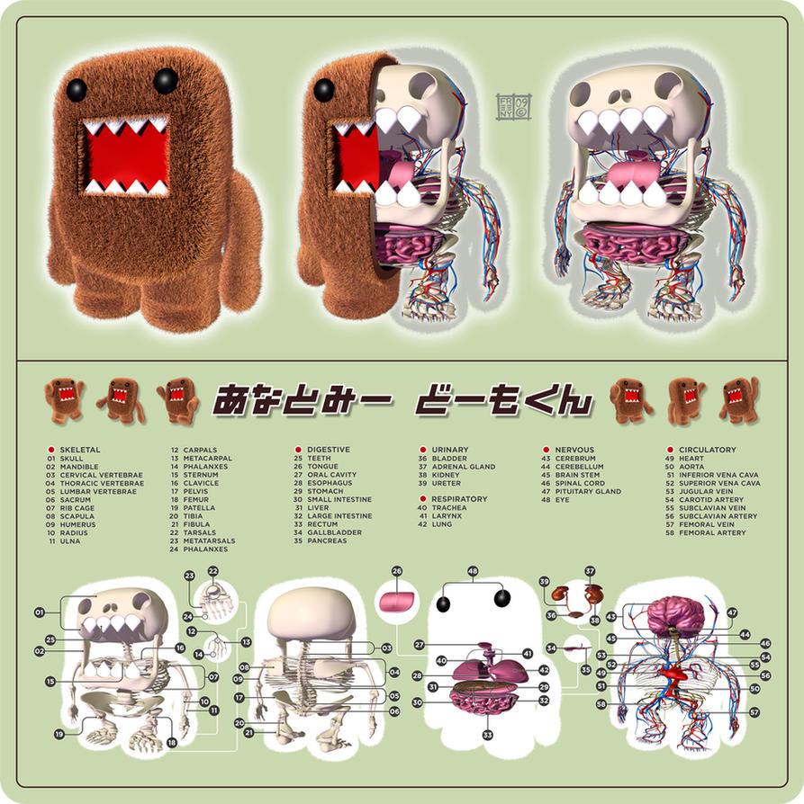 Anatomy Domo Kun by freeny