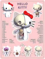 Kitty Anatomy by freeny