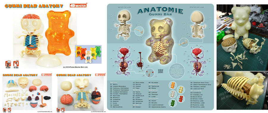 Gummi Anatomy 3d Puzzle Toy By Freeny On Deviantart