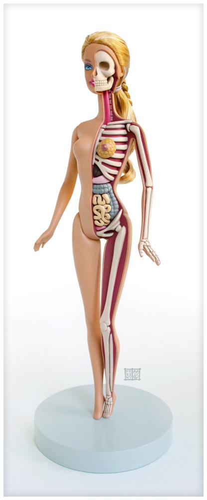Barbie Anatomical Model by freeny on DeviantArt