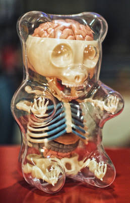 Gummi Anatomy Toy