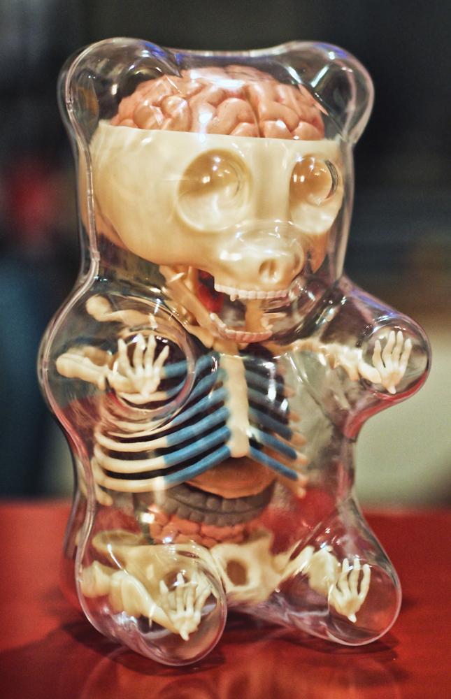 Gummi Anatomy Toy by freeny