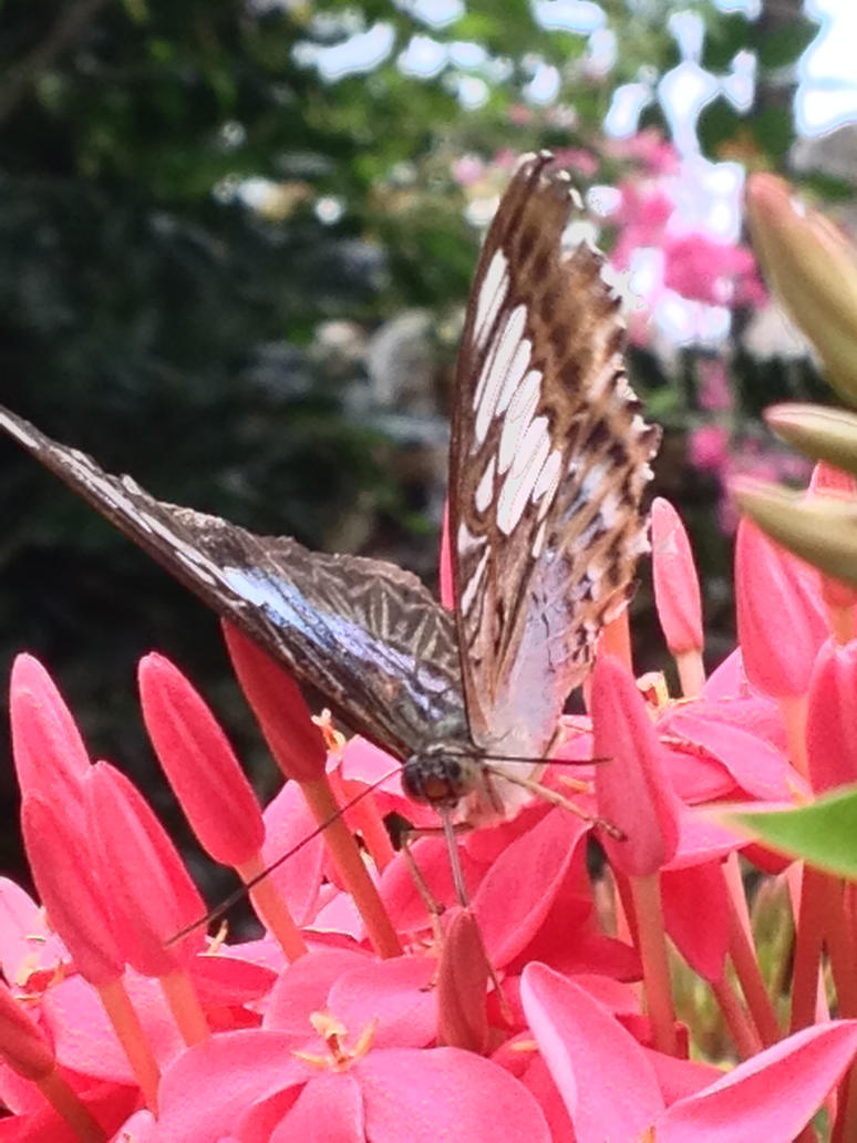 Closed Wings by ShabbyTab