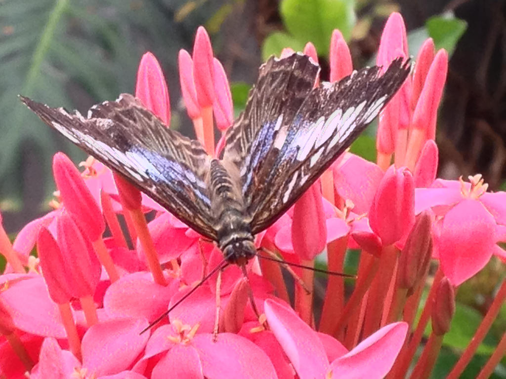 Open Wings by ShabbyTab