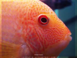 Tropical_Aquarium054_byIsraJZ