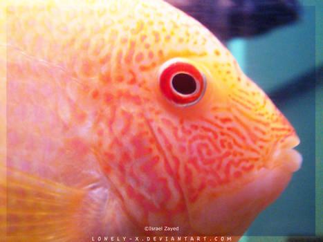 Tropical_Aquarium054b_byIsraJZ