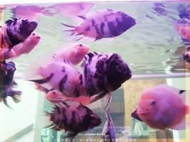Tropical_Aquarium055_byIsraJZ