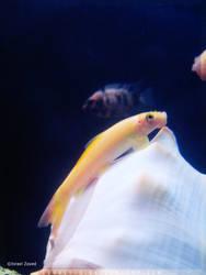 Tropical_Aquarium056_byIsraJZ
