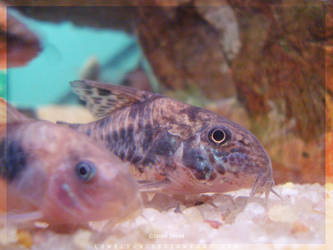 Tropical_Aquarium058_byIsraJZ